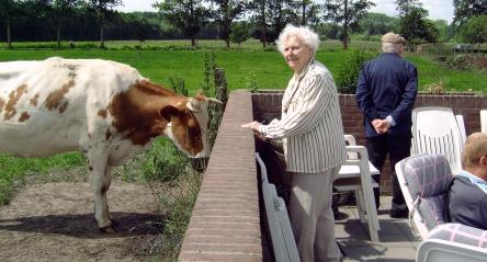 boxje dame koe